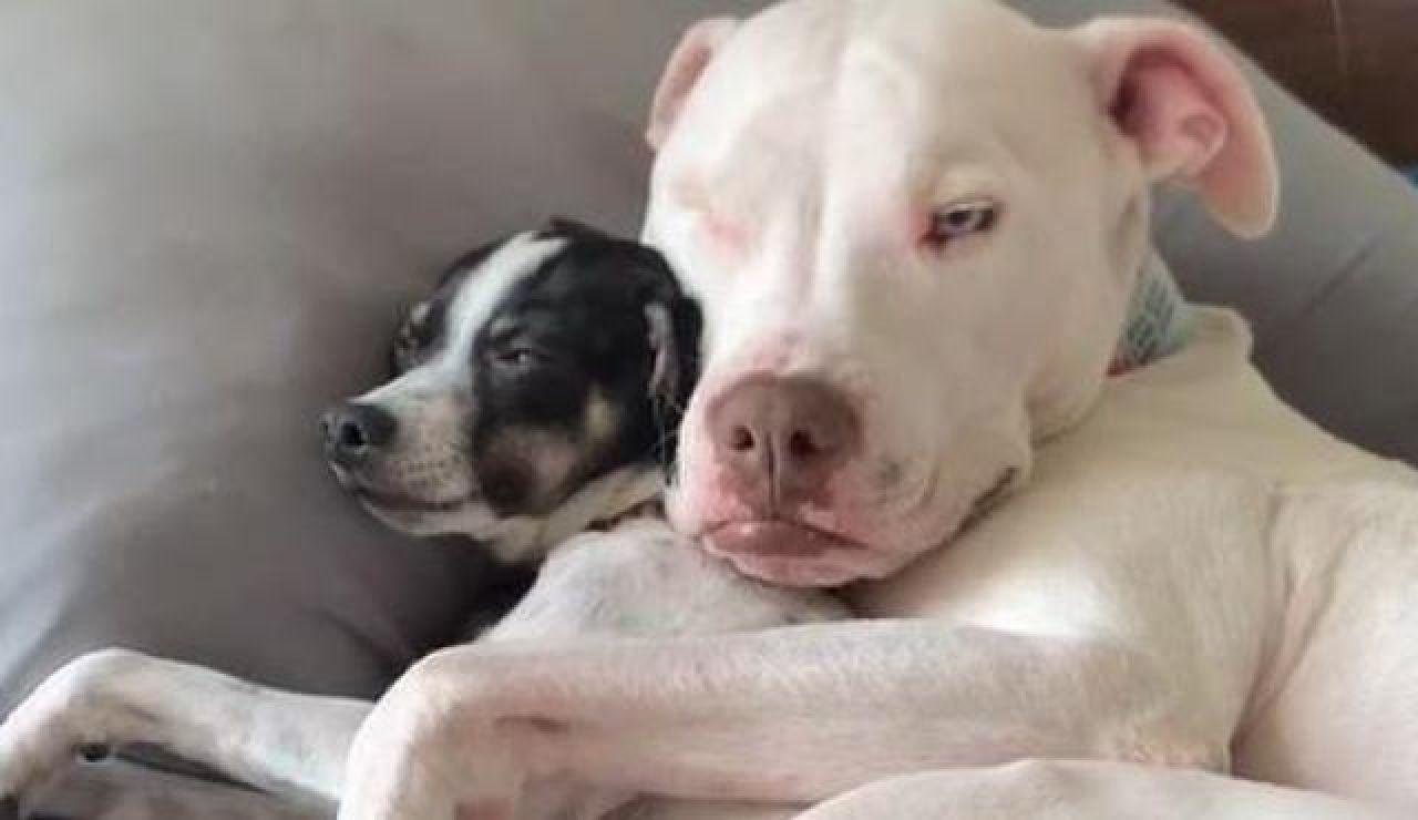 Wink, con su pequeño amigo