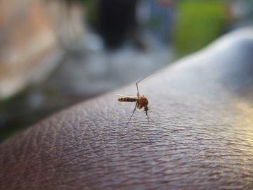 3 afectados por un brote de dengue en Teruel importado de Cuba