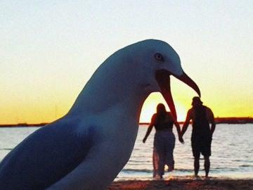 Gaviota 'comiéndose' a una pareja