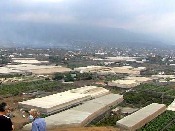 La erupción volcán en La Palma amenaza el Plátano de Canarias