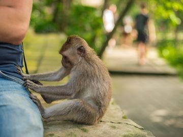 Mono robando (archivo)