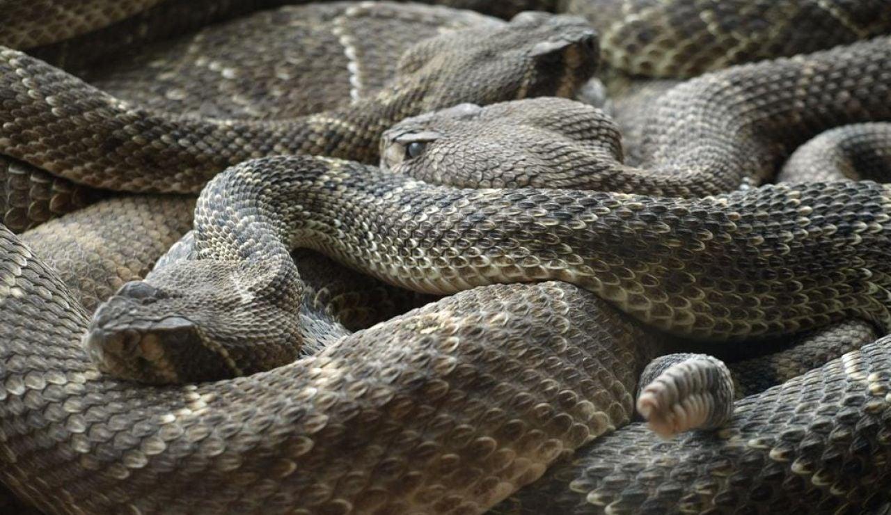 Serpientes (archivo)