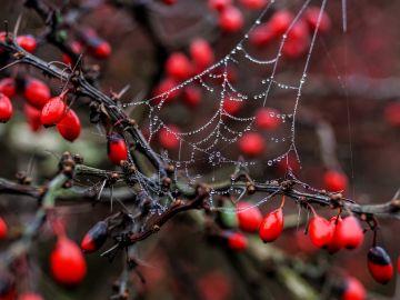 Dos niños de 3 y 5 años mueren ras intoxicarse al comer un fruto venenoso en el jardín de su abuela