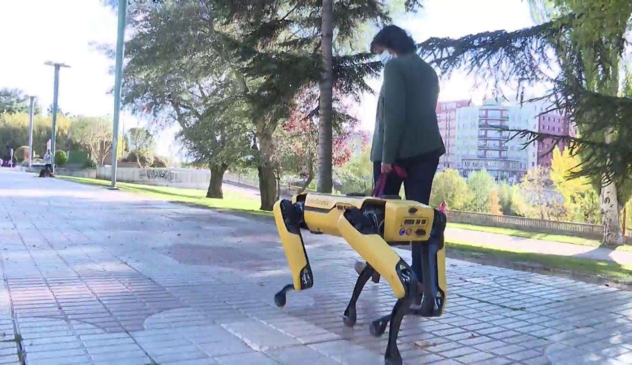 Spot, perro robot