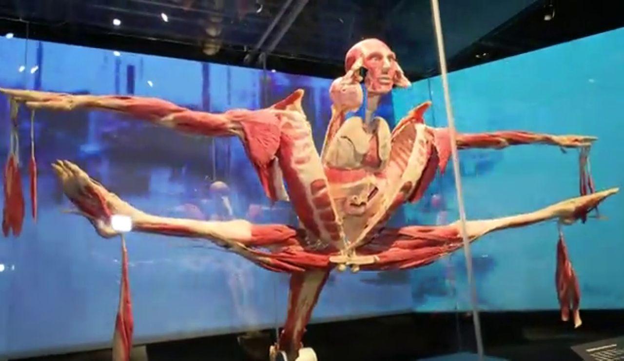 'Body Worlds', la exposición de cadáveres que enseña la vida a través de la muerte